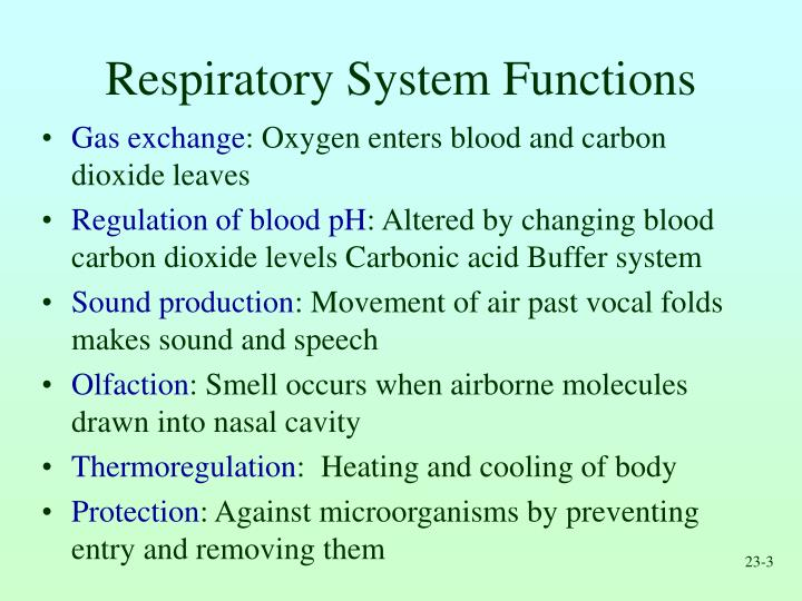 Ppt Respiratory System Powerpoint Presentation Id223614