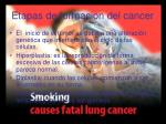 etapas de formacion del cancer