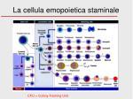 la cellula emopoietica staminale