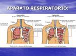 aparato respiratorio10