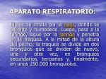 aparato respiratorio4