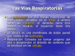 las v as respiratorias17