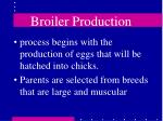broiler production