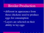 broiler production11