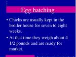 egg hatching31