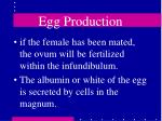egg production17