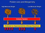 protein size and allergenicity