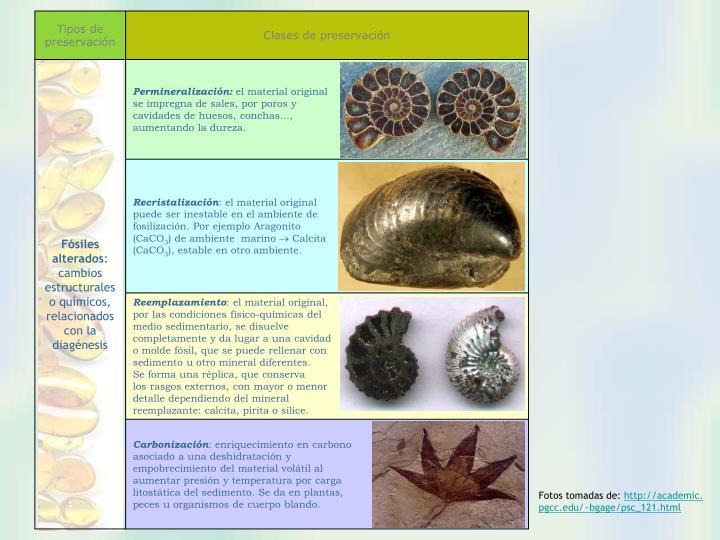 Tipos de preservación