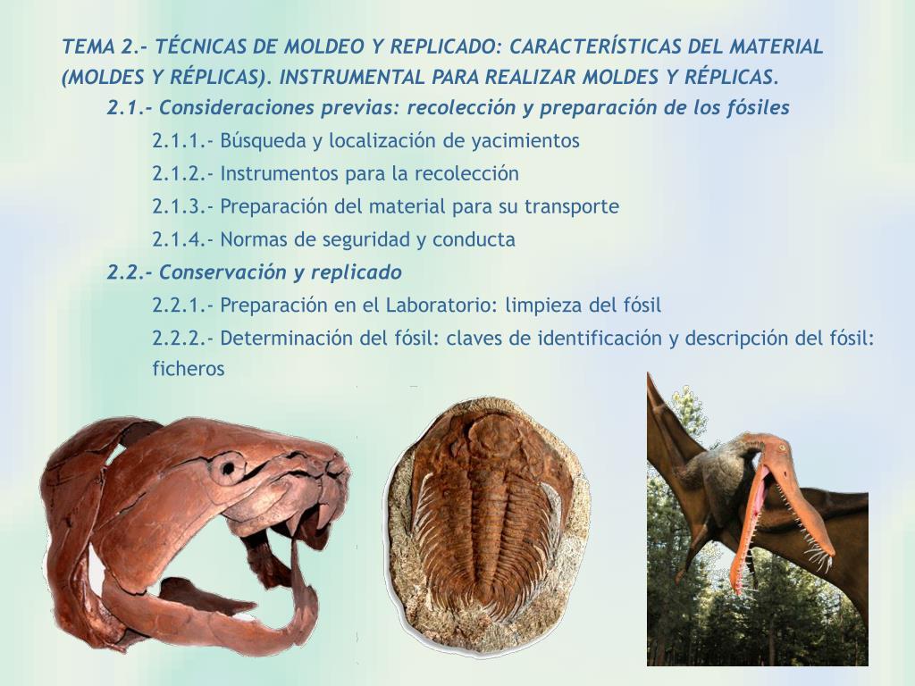 TEMA 2.- TÉCNICAS DE MOLDEO Y REPLICADO: CARACTERÍSTICAS DEL MATERIAL (MOLDES Y RÉPLICAS). INSTRUMENTAL PARA REALIZAR MOLDES Y RÉPLICAS.