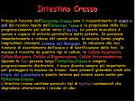 intestino crasso