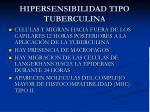 hipersensibilidad tipo tuberculina