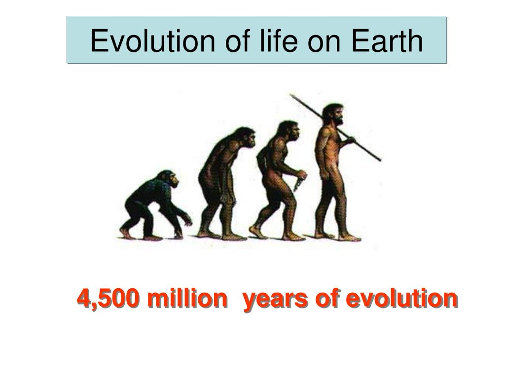 evolution of life on earth l.