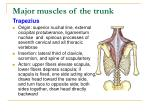 major muscles of the trunk