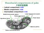osseofascial compartments of palm
