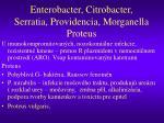 enterobacter citrobacter serratia providencia morganella proteus