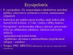 erysipelotrix