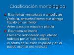 clasificaci n morfol gica9