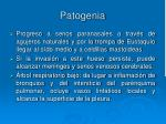 patogenia38