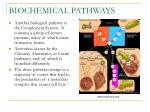 biochemical pathways2