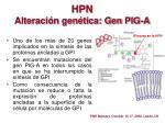 hpn alteraci n gen tica gen pig a
