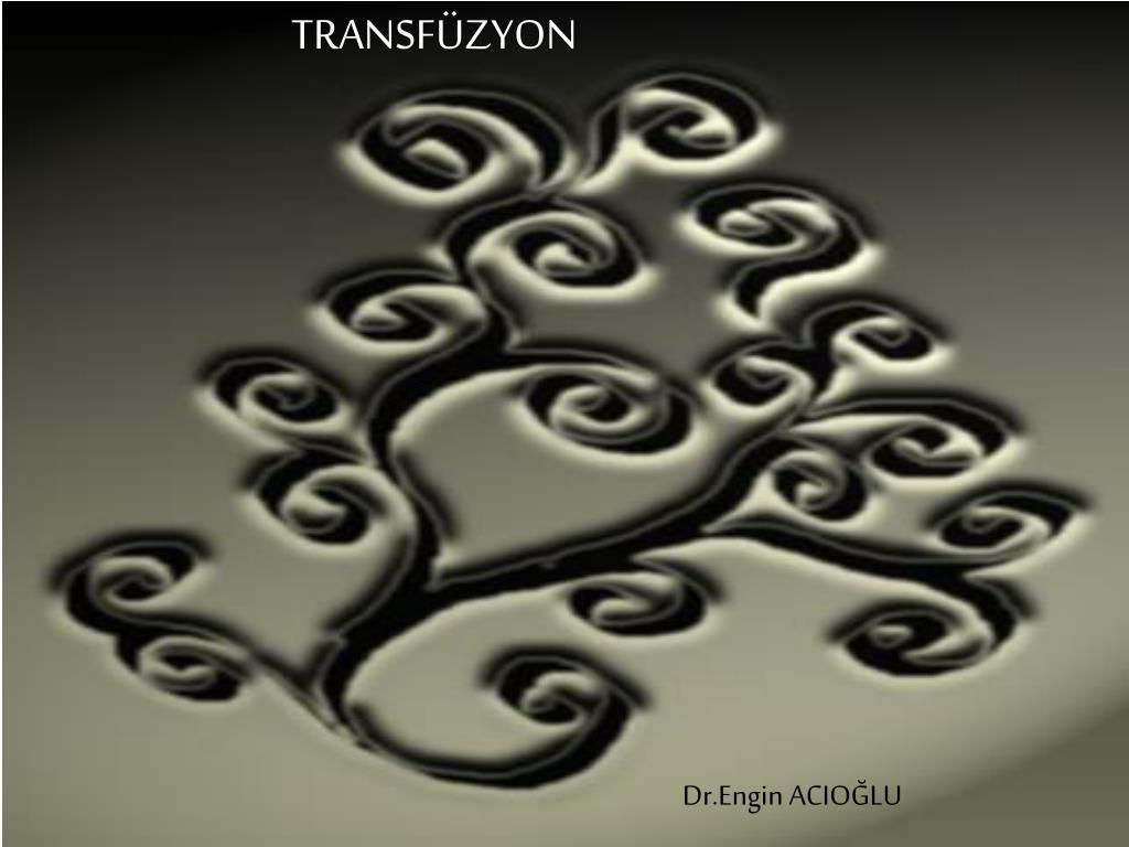 transf zyon l.