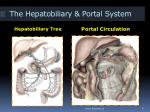 the hepatobiliary portal system