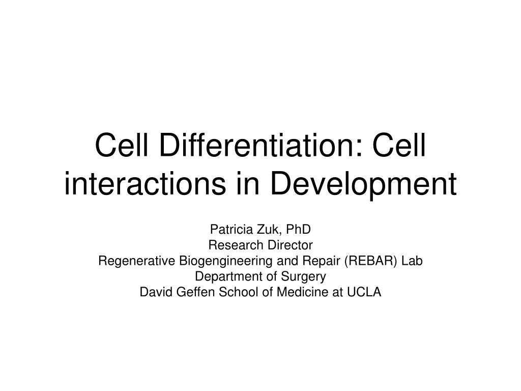 cell differentiation cell interactions in development l.