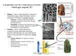 las plantas con flor estructura y funci n histolog a vegetal iv