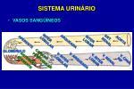 sistema urin rio13