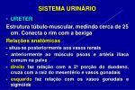 sistema urin rio14
