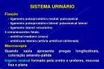 sistema urin rio18