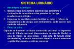 sistema urin rio20