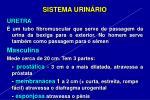 sistema urin rio21