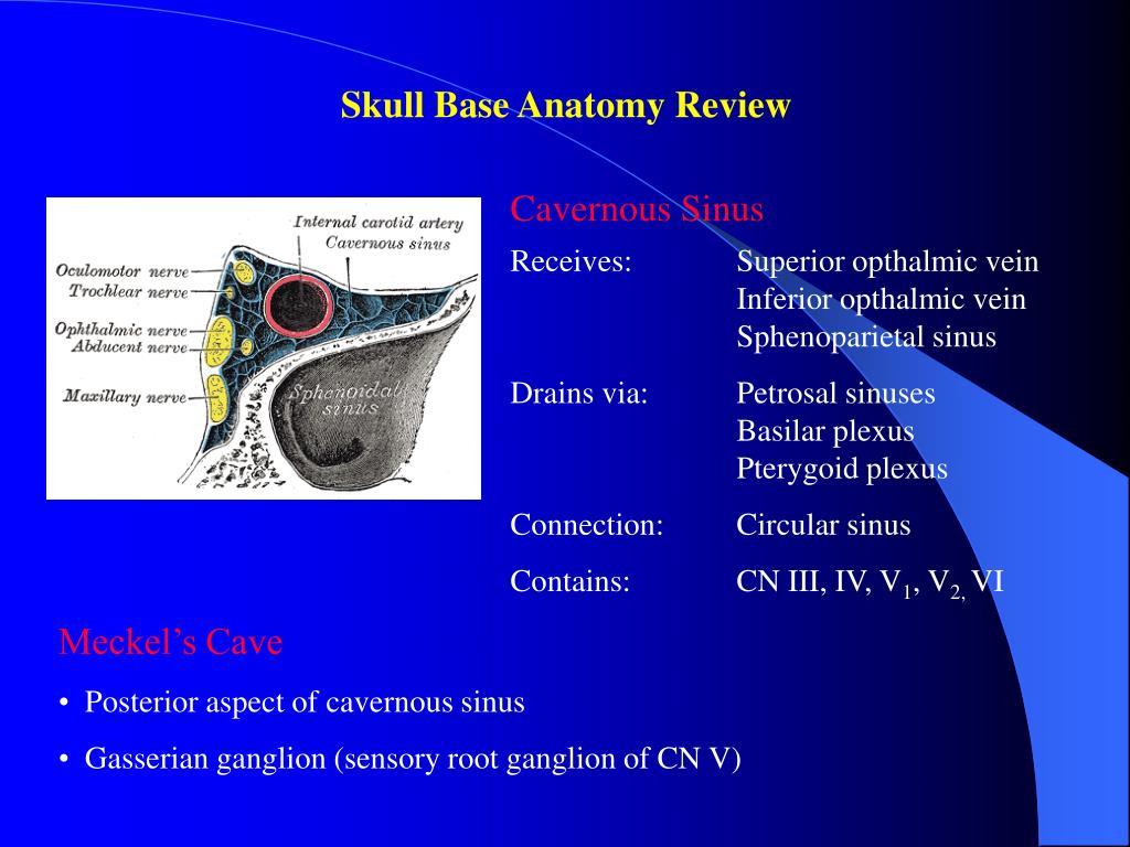 Skull Base Anatomy Review