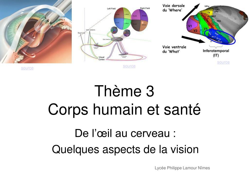 de l il au cerveau quelques aspects de la vision lyc e philippe lamour n mes l.