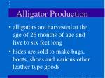 alligator production42