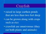 crayfish39