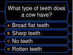 what type of teeth does a cow have