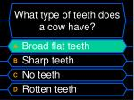 what type of teeth does a cow have1