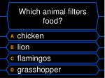 which animal filters food