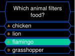 which animal filters food1