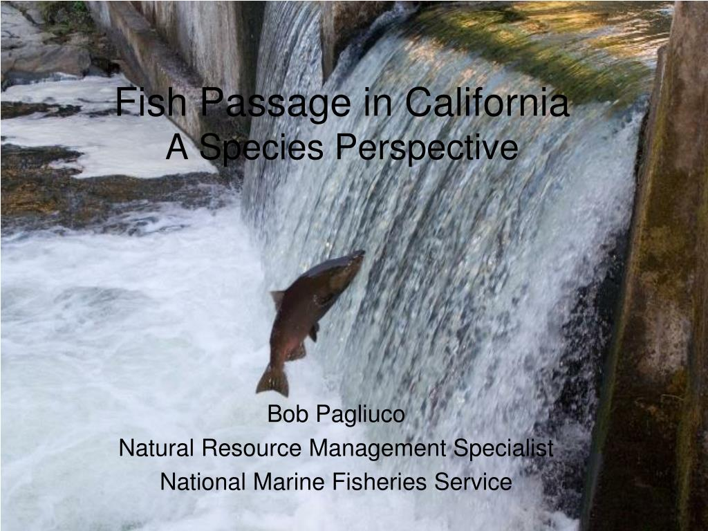 fish passage in california a species perspective l.