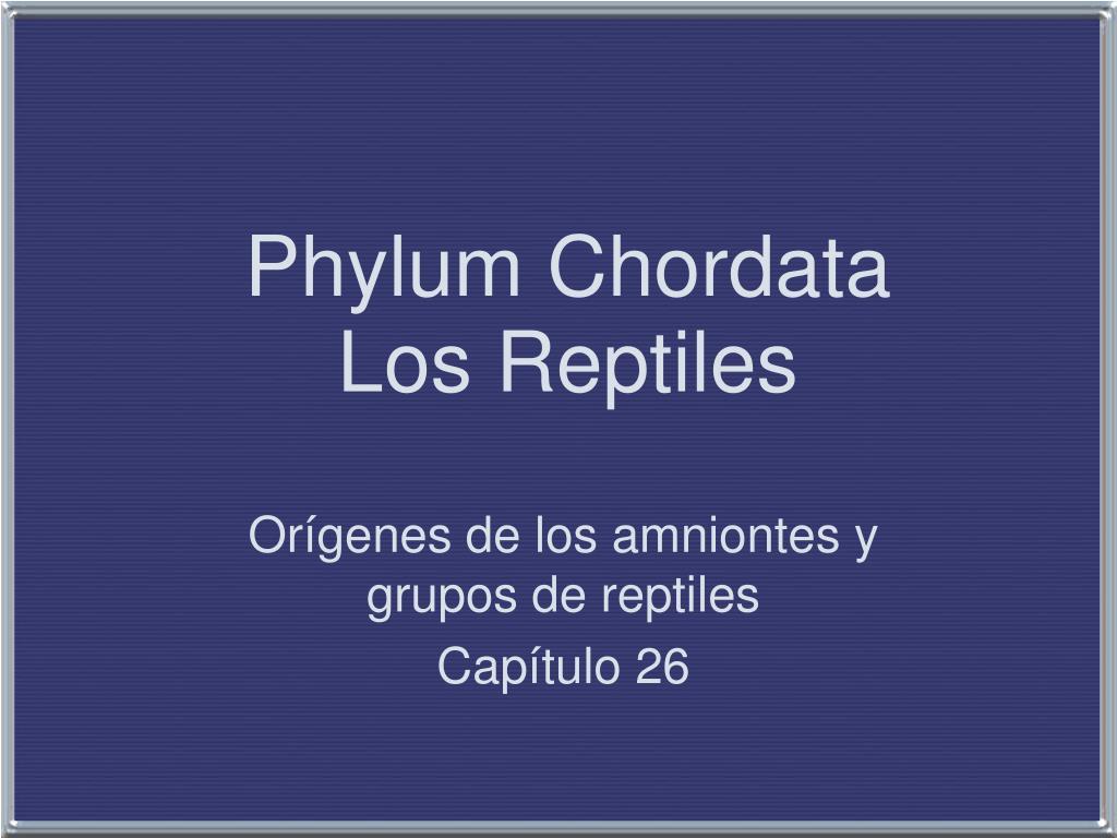 phylum chordata los reptiles l.