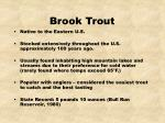 brook trout18