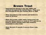 brown trout16