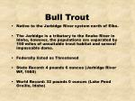 bull trout22