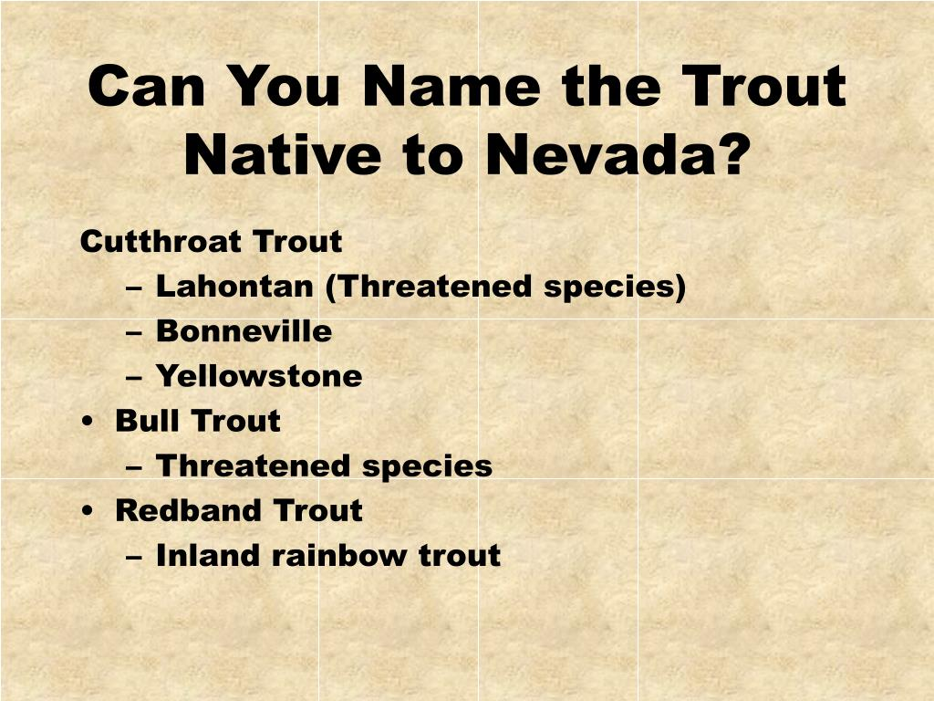Can You Name the Trout Native to Nevada?