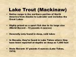 lake trout mackinaw20