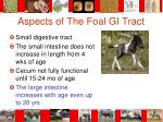 aspects of the foal gi tract