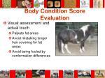 body condition score evaluation